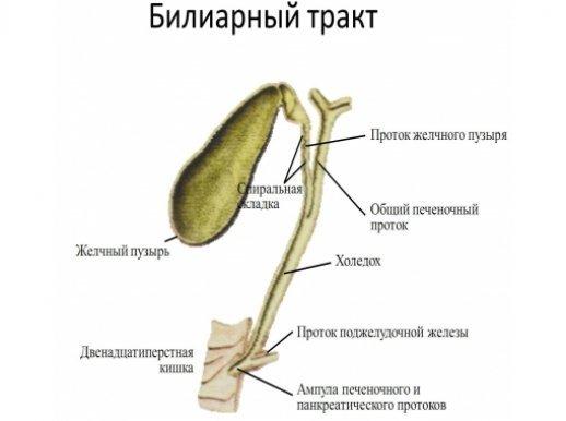 Билиарнозависимый панкреатит симптомы